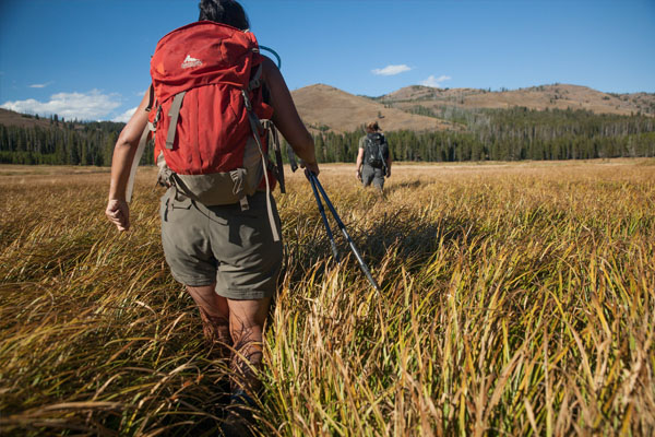 Hiker in tall grass in Yellowstone National Park